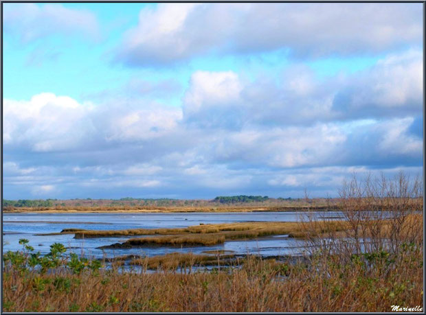 Le Bassin à marée basse, en bordure, vu depuis le Sentier du Littoral, secteur Moulin de Cantarrane, Bassin d'Arcachon