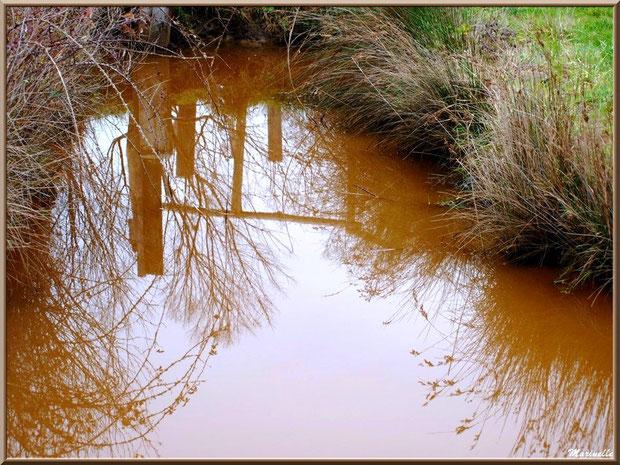 Reflets d'une barrière sur un ruisseau en bordure des prés salés, Sentier du Littoral secteur Pont Neuf, Le Teich, Bassin d'Arcachon (33)