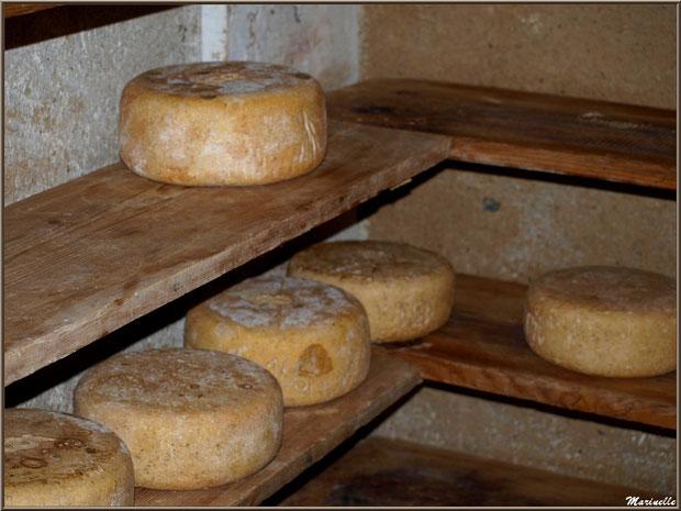 Saloir de la fromagerie artisanale Laborde-Bouchet, Fête au Fromage, Hera deu Hromatge, à Laruns en Vallée d'Ossau (64)