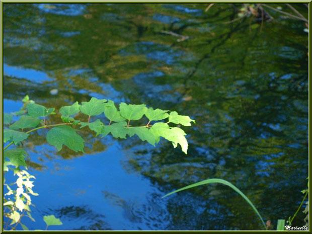 Branche d'arbrisseau et reflets en bordure de La Leyre, Sentier du Littoral au lieu-dit Lamothe, Le Teich, Bassin d'Arcachon (33)