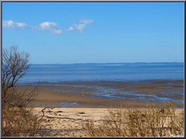 La plage hivernale avec ses arbrisseaux et tamaris en bordure, le Bassin à marée basse, Sentier du Littoral, secteur Moulin de Cantarrane, Bassin d'Arcachon