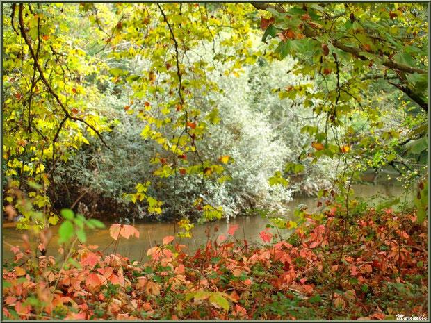 ord de La Leyre en tenue automnale, Sentier du Littotal au lieu-dit Lamothe, Le Teich, Bassin d'Arcachon (33)