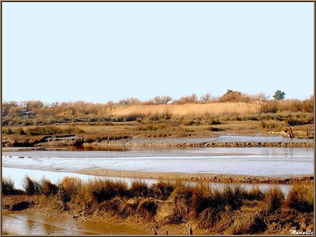 Marécage côté Bassin, Sentier du Littoral, secteur Domaine de Certes et Graveyron, Bassin d'Arcachon (33)