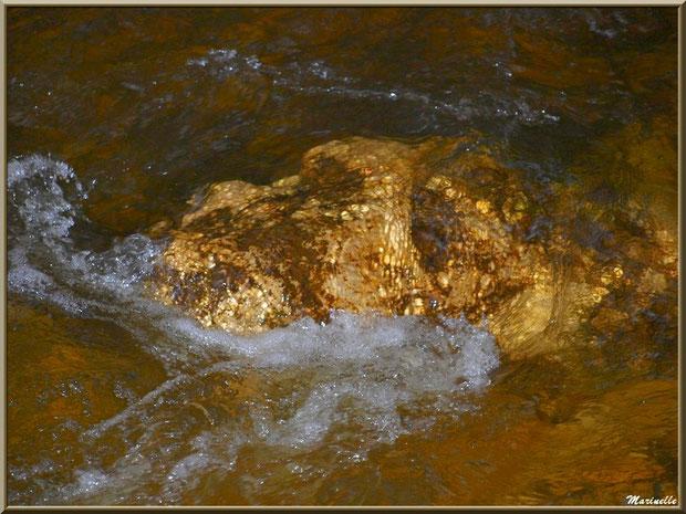 Telle une pépite d'or au creux de La Leyre, Sentier du Littoral au lieu-dit Lamothe, Le Teich, Bassin d'Arcachon (33)