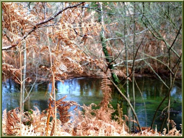 Fougères hivernales et reflets sur le Canal des Landes au Parc de la Chêneraie à Gujan-Mestras (Bassin d'Arcachon)