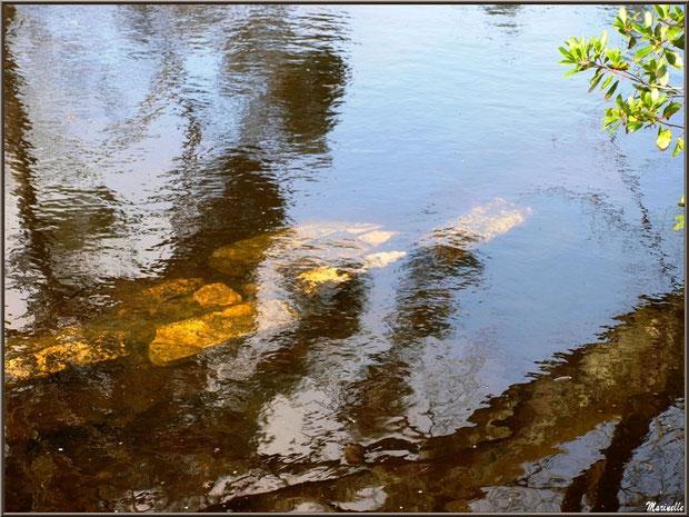Pierres et leurs reflets d'or dans le Canal des Landes au Parc de la Chêneraie à Gujan-Mestras (Bassin d'Arcachon)