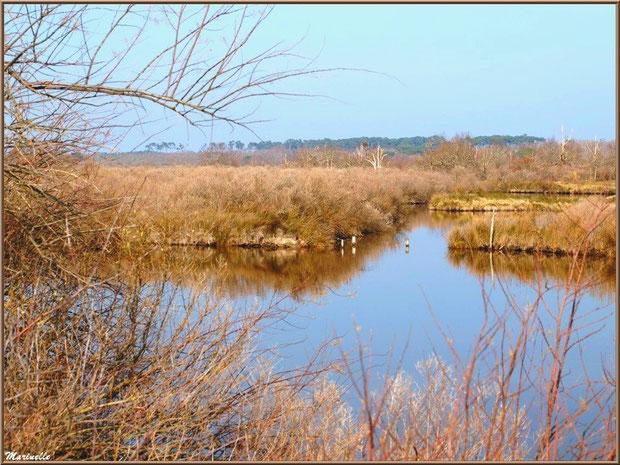 Réservoir et reflets, Sentier du Littoral, secteur Domaine de Certes et Graveyron, Bassin d'Arcachon (33)