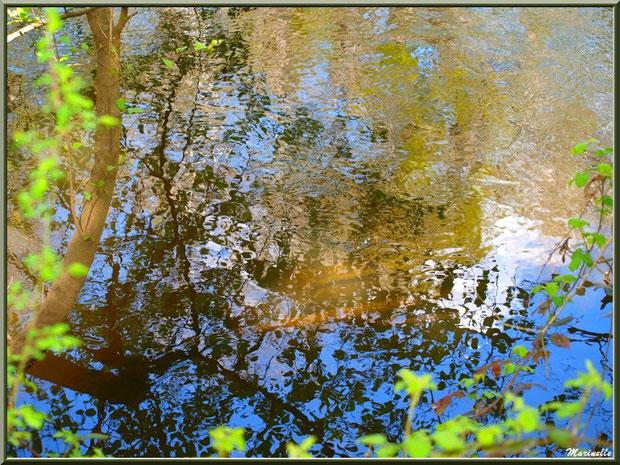 Arbrisseaux et reflets en bordure de La Leyre, Sentier du Littoral au lieu-dit Lamothe, Le Teich, Bassin d'Arcachon (33)