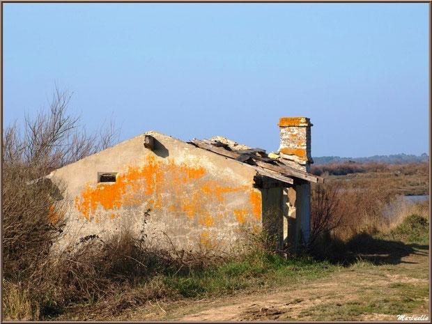Ruines d'une ancienne maison d'un garde pêche-chasse en bordure du sentier et les réservoirs à l'arrière, Sentier du Littoral, secteur Domaine de Certes et Graveyron, Bassin d'Arcachon (33)