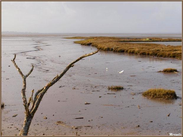 """Petit chenal, appelé """"estey"""", et quelques mouettes, tonne pour la chasse et son lac, côté Bassin sur le Sentier du Littoral, secteur Moulin de Cantarrane, Bassin d'Arcachon"""