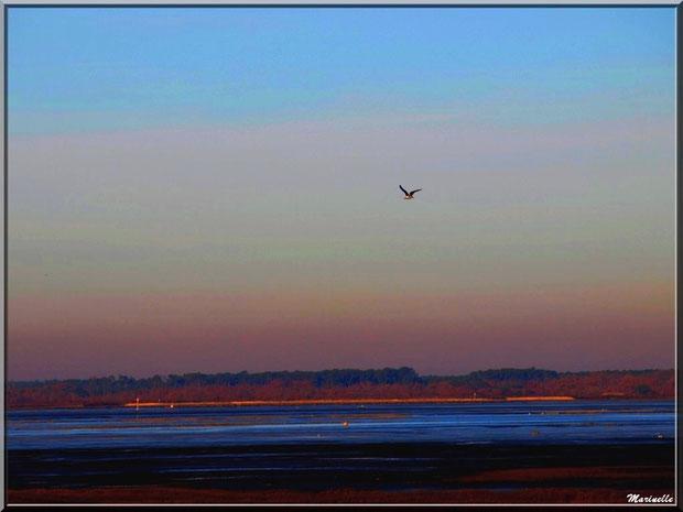 Soleil couchant sur le Bassin et mouette en vol, Sentier du Littoral, secteur Moulin de Cantarrane, Bassin d'Arcachon