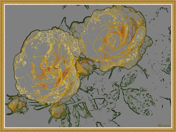 Roses jaunes, fleurs et boutons