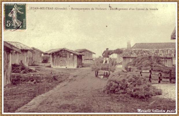 Gujan-Mestras autrefois : cabanes et convoi de brande pour les cages à tuiles, Bassin d'Arcachon (carte postale, collection privée)