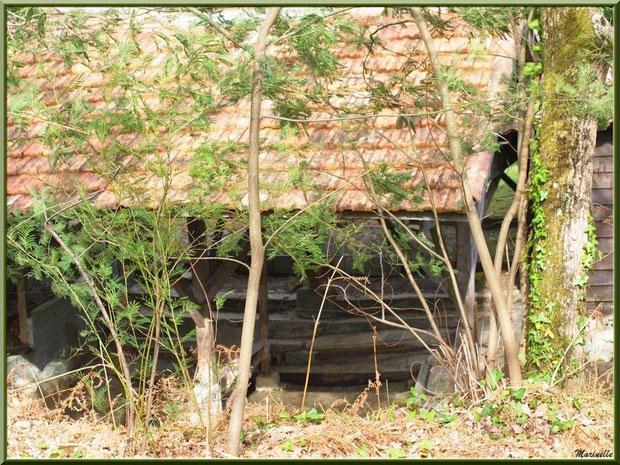 Ancien lavoir derrière les mimosas au Parc de la Chêneraie, en automne, Gujan-Mestras (Bassin d'Arcachon)