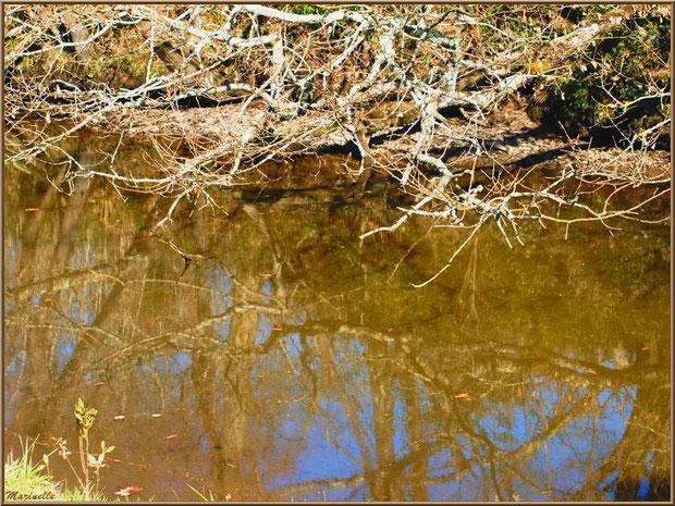 Un réservoir et reflets de branchages, Sentier du Littoral, secteur Domaine de Certes et Graveyron, Bassin d'Arcachon (33)