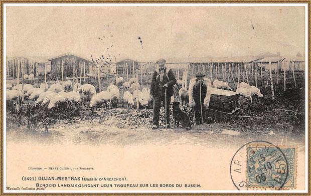 Gujan-Mestras autrefois : En 1905, bergers landais gardant leur troupeau sur les bords du Bassin, Bassin d'Arcachon (carte postale, collection privée)