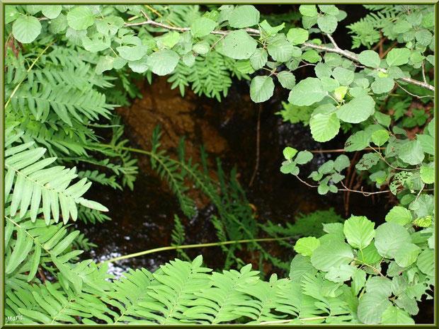 Trouée dans la verdure au-dessus d'un ruisseau du Canal des Landes au Parc de la Chêneraie à Gujan-Mestras (Bassin d'Arcachon)