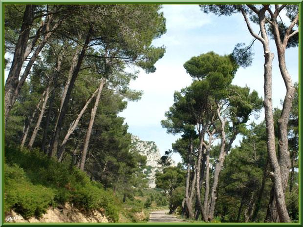Route dans les Alpilles vers Aureille, Bouches du Rhône