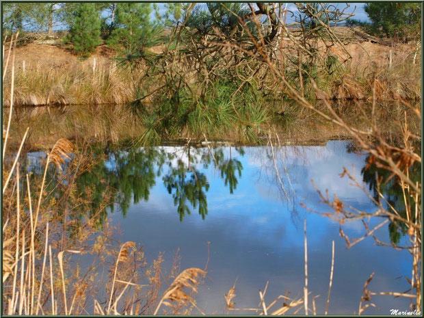 Reflets dans un réservoir, Sentier du Littoral, secteur Moulin de Cantarrane, Bassin d'Arcachon