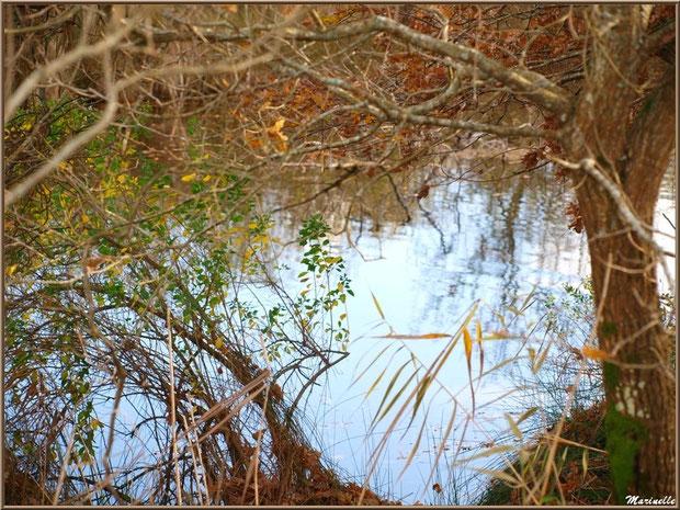Végétation en décembre en bordure d'un réservoir, Sentier du Littoral, secteur Moulin de Cantarrane, Bassin d'Arcachon
