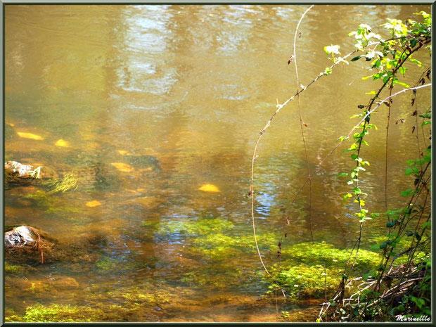 Roncier, pierres, mousses, algues et reflets en bordure de La Leyre, Sentier du Littoral au lieu-dit Lamothe, Le Teich, Bassin d'Arcachon