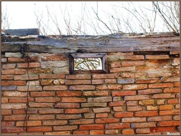 Ruines d'une ancienne maison d'un garde pêche-chasse avec un des murs intérieurs en briquettes , Sentier du Littoral, secteur Domaine de Certes et Graveyron, Bassin d'Arcachon (33)