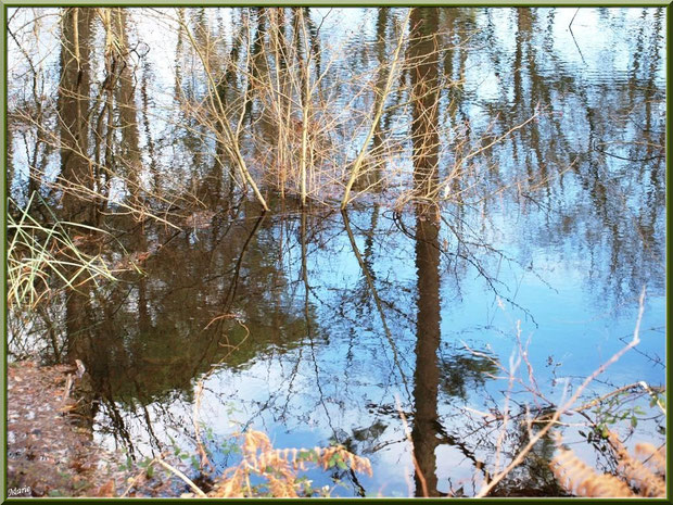 Reflets hivernaux sur le Canal des Landes au Parc de la Chêneraie à Gujan-Mestras (33)