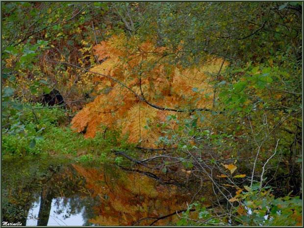 Végétation automnale et reflets en bordure du Canal des Landes au Parc de la Chêneraie à Gujan-Mestras (Bassin d'Arcachon)
