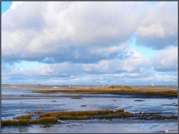Le Bassin à marée basse, en bordure, avec en fond Audenge, vu depuis le Sentier du Littoral, secteur Moulin de Cantarrane, Bassin d'Arcachon