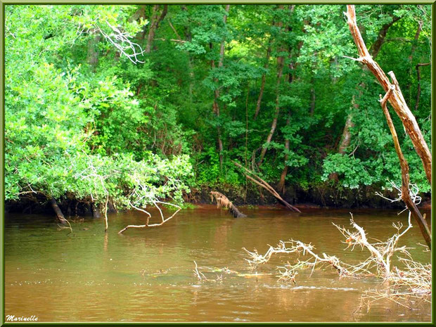 Végétation luxuriante, bois et reflets en bordure de La Leyre, Sentier du Littoral au lieu-dit Lamothe, Le Teich, Bassin d'Arcachon (33)