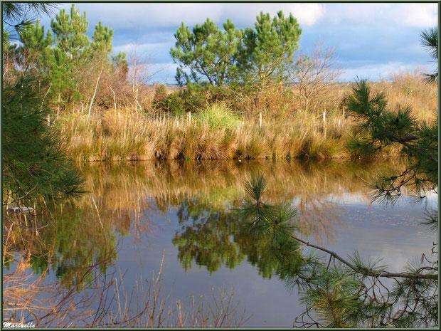 Reflets dans les anciens réservoirs à poissons, Sentier du Littoral entre Gujan-Mestras et Le Teich - Bassin d'Arcachon (33)