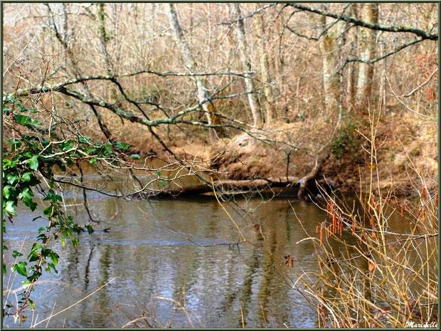 Bord de La Leyre en hiver, Sentier du Littoral au lieu-dit Lamothe, Le Teich, Bassin d'Arcachon (33)