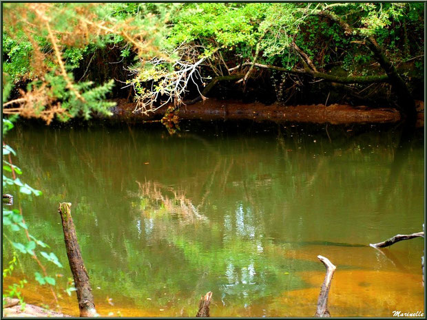 Bois et reflets, en début d'automne, en bordure de La Leyre, Sentier du Littoral au lieu-dit Lamothe, Le Teich, Bassin d'Arcachon (33)