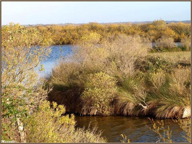 Végétation hivernale dans les réservoirs et prés salés, sur le Sentier du Littoral, secteur Moulin de Cantarrane, Bassin d'Arcachon