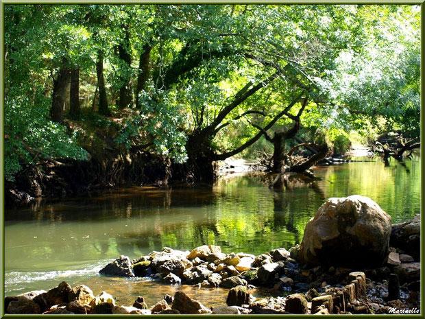 La Leyre et ses reflets, Sentier du Littoral au lieu-dit Lamothe, Le Teich, Bassin d'Arcachon (33)