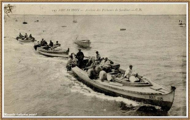 Retour de la pêche à la sardine, Bassin d'Arcachon (33)
