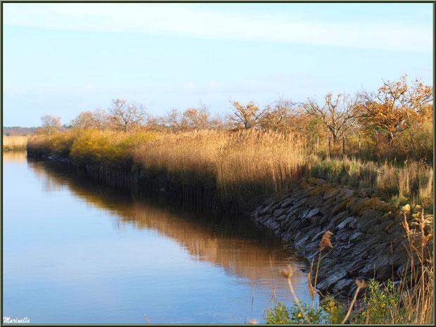 La Leyre avec ses reflets et le sentier qui la borde, Sentier du Littoral, secteur Port du Teich en longeant La Leyre, Le Teich, Bassin d'Arcachon (33)