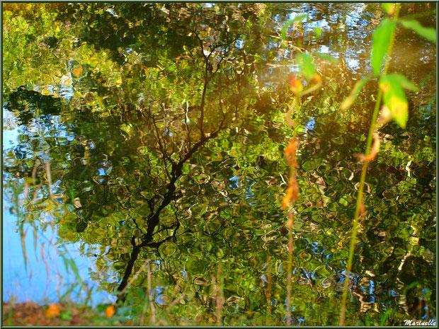 Reflets impressionnistes, en début d'automne, sur La Leyre, Sentier du Littoral au lieu-dit Lamothe, Le Teich, Bassin d'Arcachon (33)