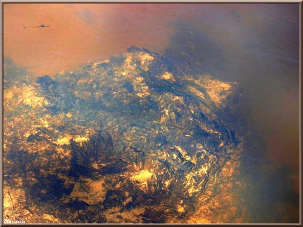 Pierre telle une feuille de papier d'or froissée en fond de La Leyre, Sentier du Littoral au lieu-dit Lamothe, Le Teich, Bassin d'Arcachon (33)