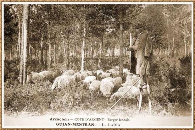 Gujan-Mestras autrefois : Berger landais, sur ses échasses, gardant son troupeau tout en tricotant, Bassin d'Arcachon (carte postale, collection privée)