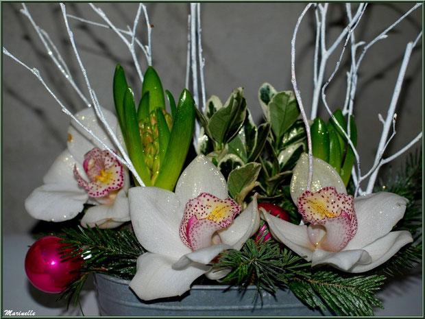 Meilleurs voeux : orchidées et jacynthes