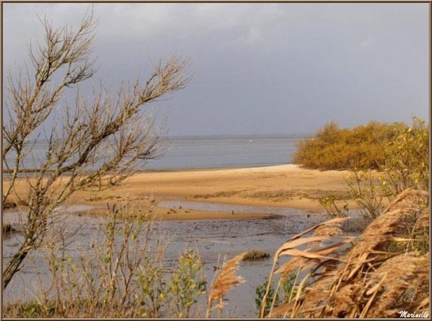 Derrière les roseaux et arbrisseaux, une bande de plage sur le Bassin, Sentier du Littoral, secteur Moulin de Cantarrane, Bassin d'Arcachon