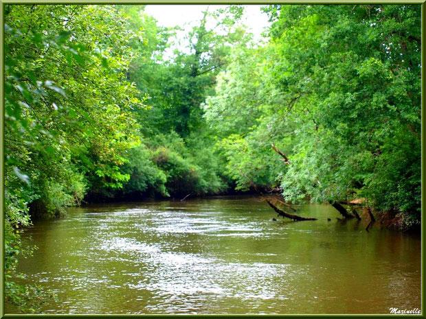 La Leyre avec sa végétation luxuriante et ses reflets, Sentier du Littoral au lieu-dit Lamothe, Le Teich, Bassin d'Arcachon (33)