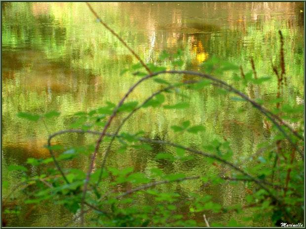 Végétation et reflets impressionnistes, en début d'automne, en bordure de La Leyre, Sentier du Littoral au lieu-dit Lamothe, Le Teich, Bassin d'Arcachon (33)