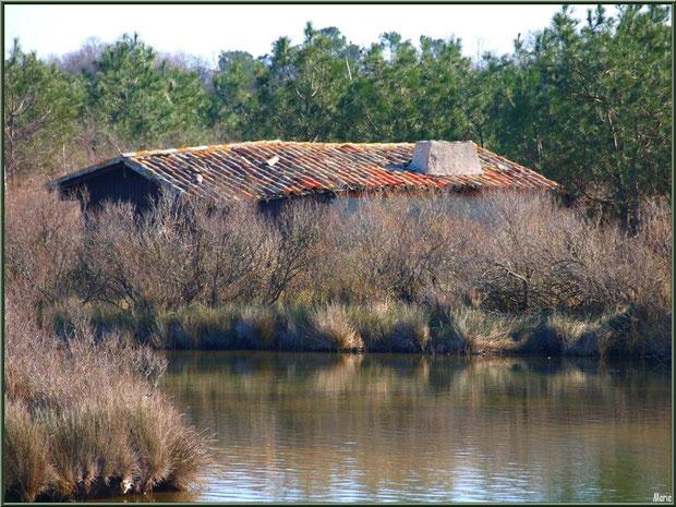 Cabane et ses reflets au milieu d'un des réservoirs sur le Sentier du Littoral, secteur Moulin de Cantarrane, Bassin d'Arcachon (ancienne maison d'un garde chasse-pêche ou éclusier)