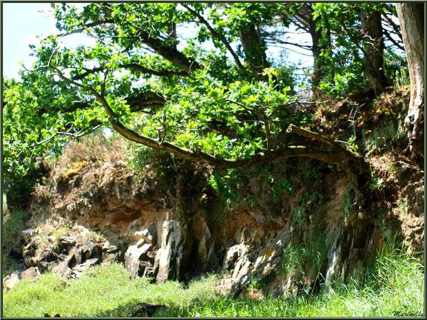 Le sentier de la Vallée du Bas à son extrémité en bordure de la rivière Le Jaudy - Les Jardins du Kerdalo à Trédarzec, Côtes d'Armor (22)