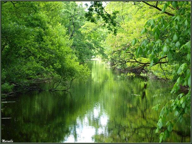 Le Canal des Landes au Parc de la Chêneraie à Gujan-Mestras (Bassin d'Arcachon) : reflets de mai