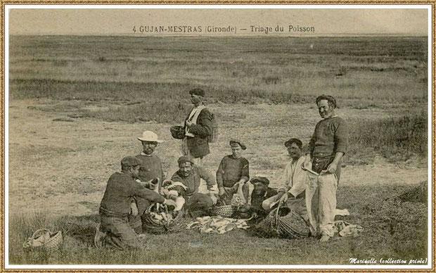 Gujan-Mestras autrefois : Pécheurs au triage du poisson, Bassin d'Arcachon (carte postale, collection privée)