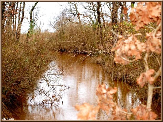Végétation hivernale et reflets dans un ruisseau bordant le sentier, Sentier du Littoral secteur Pont Neuf, Le Teich, Bassin d'Arcachon