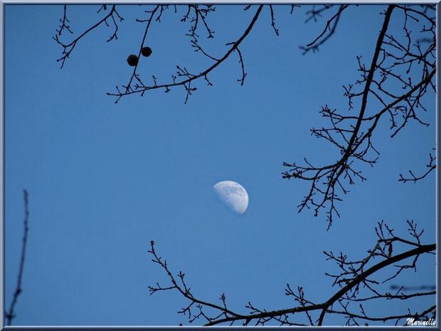 La lune au coeur des branches d'un chêne au Parc de la Chêneraie à Gujan-Mestras (Bassin d'Arcachon)